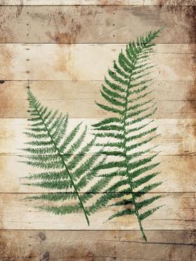 Ferns On Wood by Jace Grey
