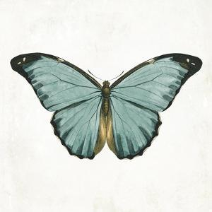 Neutral Butterfly 4 by Jace Grey