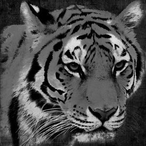 Tiger Black And White by Jace Grey