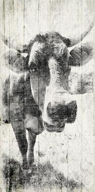 Vintage Cow by Jace Grey