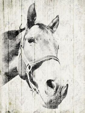 Vintage Horse by Jace Grey