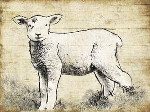 Vintage Lamb Sketch by Jace Grey