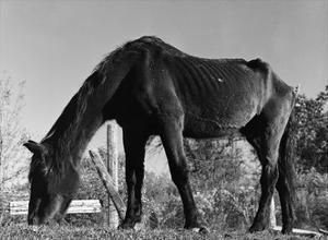Old Horse by Jack Delano