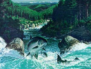 Spring Salmon by Jack Dumas