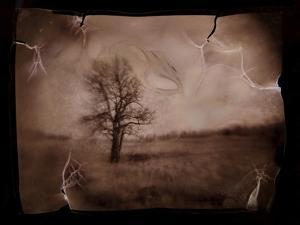 Hanging Tree by Jack Germsheld