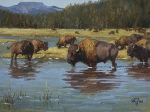 Buffalo Crossing by Jack Sorenson