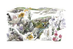 A Drawing of the Wildflowers in America's Alpine Tundras by Jack Unruh