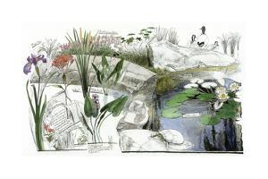 A Drawing of the Wildflowers of an American Eastern Wetland by Jack Unruh
