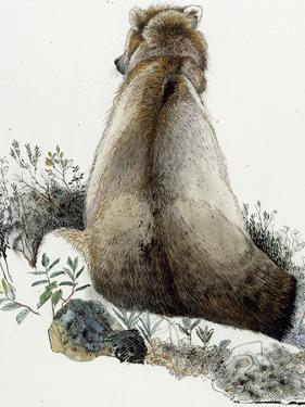 Illustration of a Grizzly Bear in the Arctic National Wildlife Refuge by Jack Unruh