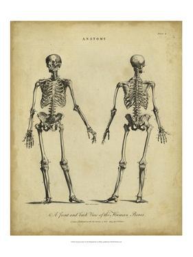 Anatomy Study I by Jack Wilkes