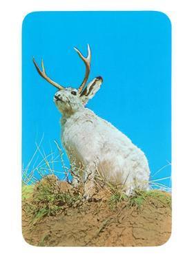 Jackalope, Horned Rabbit