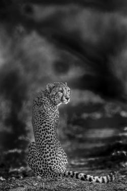 The Look Back by Jaco Marx