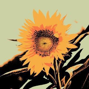 Pop Art Sunflower II by Jacob Green