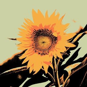 Pop Art Sunflower II by Jacob Green