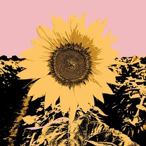 Pop Art Sunflower III by Jacob Green