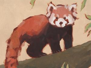 Red Panda I by Jacob Green