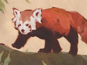 Red Panda II by Jacob Green