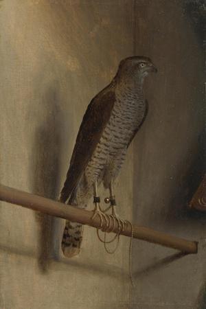 A Sparrowhawk, 1510S