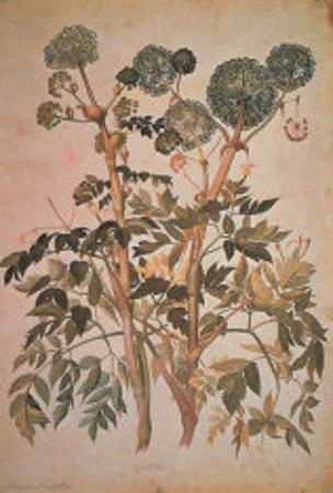 Angelica Arcangelica by Jacopo Ligozzi