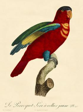 Barraband Parrot No. 95 by Jacques Barraband