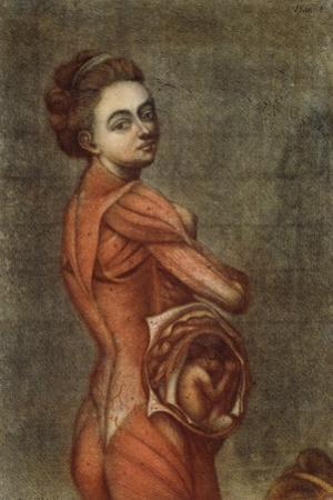 Anatomical Illustration in Colour of a Pregnant Female, 1778