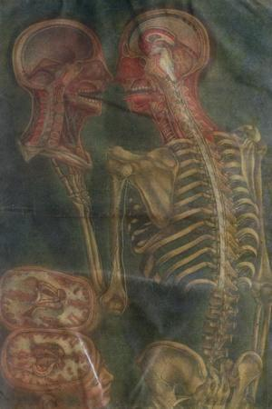 """The Brain and the Spinal Chord, from """"Exposition Anatomique De La Structure Du Corps Humain,"""" 1759"""