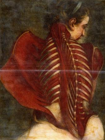 The Flayed Angel, C.1745