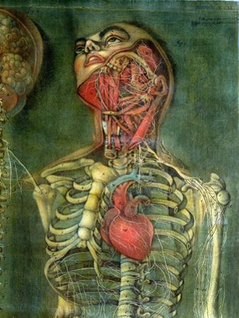 Throat and Heart, Plate Anatomy of the Visceras, Dissected, Painted and Engraved by Gautier, 1745