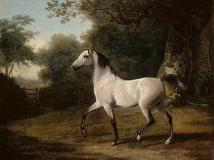 A Grey Arab Stallion in a Wooded Landscape by Jacques-Laurent Agasse