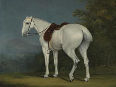 A Lady's Grey Hunter, C.1806