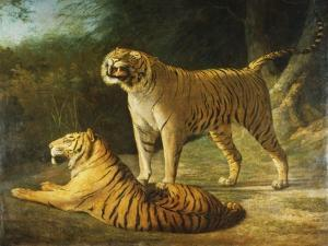 A Tiger and Tigress at the Exeter 'Change Menagerie in 1808, 1808 by Jacques-Laurent Agasse
