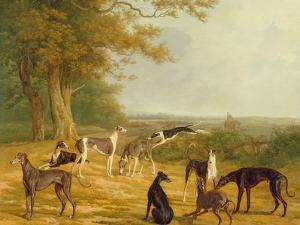 Nine Greyhounds in a Landscape by Jacques-Laurent Agasse