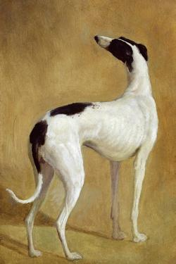 Study of a Greyhound by Jacques-Laurent Agasse