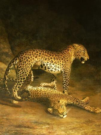 Two Leopards Lying in the Exeter Exchange, 1808