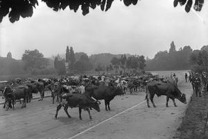 Longchamp Racecourse Transformed into a Cattle Enclosure, Near the Mill of Longchamp, Paris, 1914 by Jacques Moreau