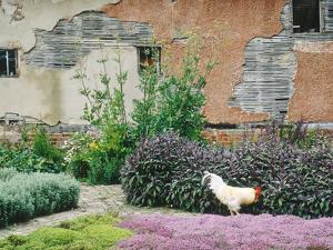 Formal Herb Garden Thyme by Jacqui Hurst