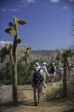 A Group of Tourists Hiking Along the Trail, Looking for Land Iguanas by Jad Davenport