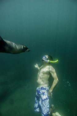A Naturalist Guide, Playing with a Galapagos Sea Lion Pup by Jad Davenport