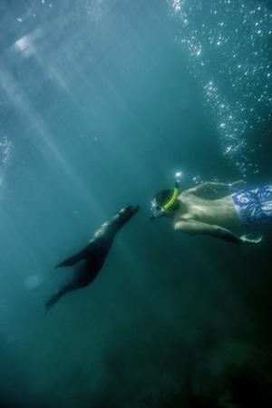 A Naturalist Guide Playing with a Galapagos Sea Lion Pup by Jad Davenport