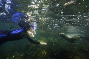 A Snorkeler Playing with a Galapagos Sea Lion Pup by Jad Davenport