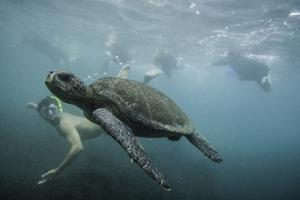 A Snorkeler Swimming with a Sea Turtle by Jad Davenport