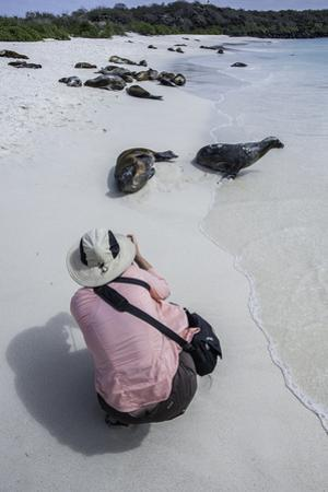 A Tourist Photographing a Galapagos Sea Lion on the Beach by Jad Davenport