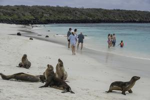 Tourists and Curious Galapagos Sea Lions Mingle on the Beach by Jad Davenport