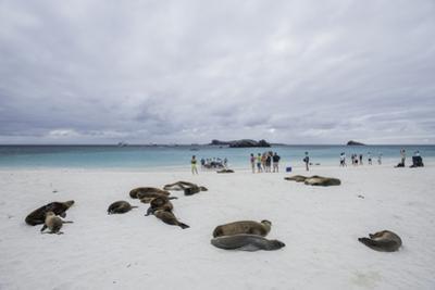 Tourists and Galapagos Sea Lions Mingle on the Beach by Jad Davenport