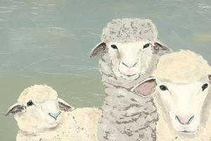 Bashful Sheep II by Jade Reynolds