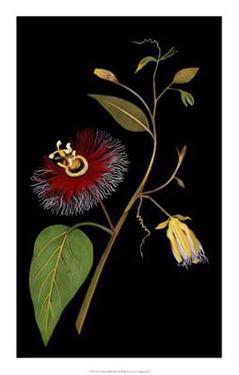 Exotic Beauty III by Jaggu Prasad