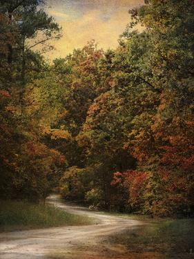 Autumn Forest 1 by Jai Johnson