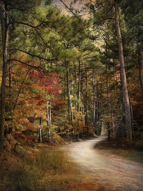 Autumn Forest 2 by Jai Johnson