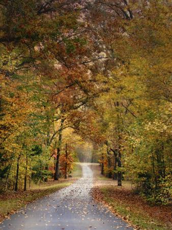 Autumn Passage 4 by Jai Johnson