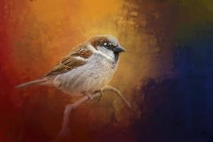 Autumn Sparrow by Jai Johnson